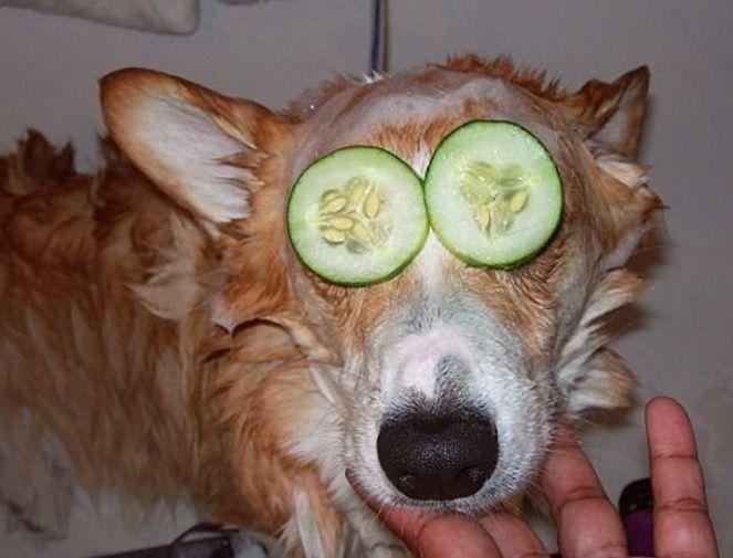 смешная собака