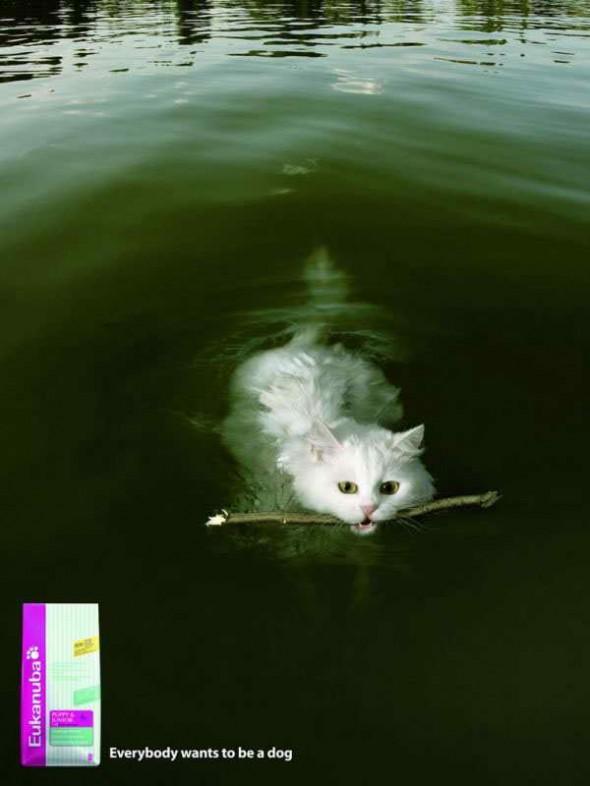 Фото дизайнера креативной рекламы. Каждый из нас иной раз быть любмой собакой хозяина