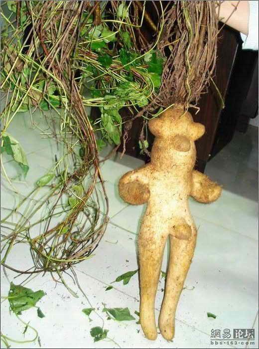 Чудо растение