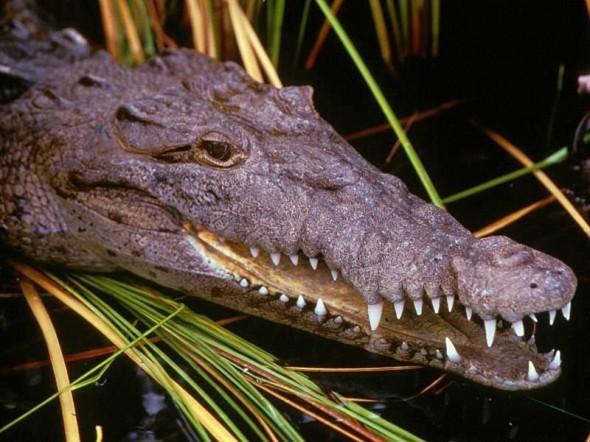 Одесский крокодил