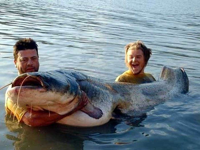 Некоторые рыбки такие огромные, что я даже не представляю