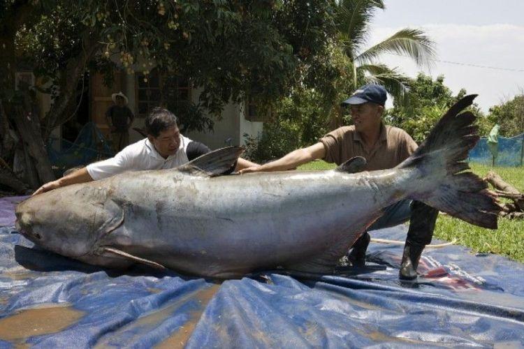 каждый рыбак весит 70 кг сколько омулей