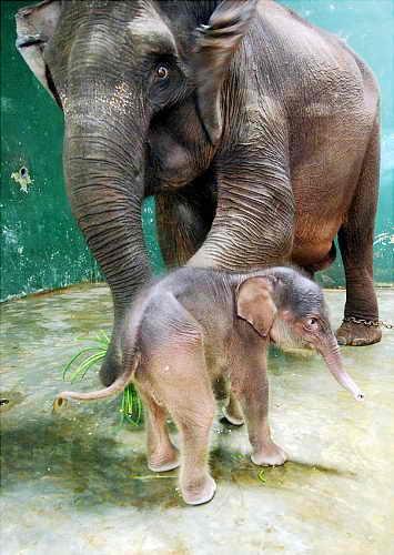 9-дневный слоненок