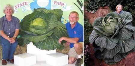 Фото огромных овощей в жопе девочек фото 66-982
