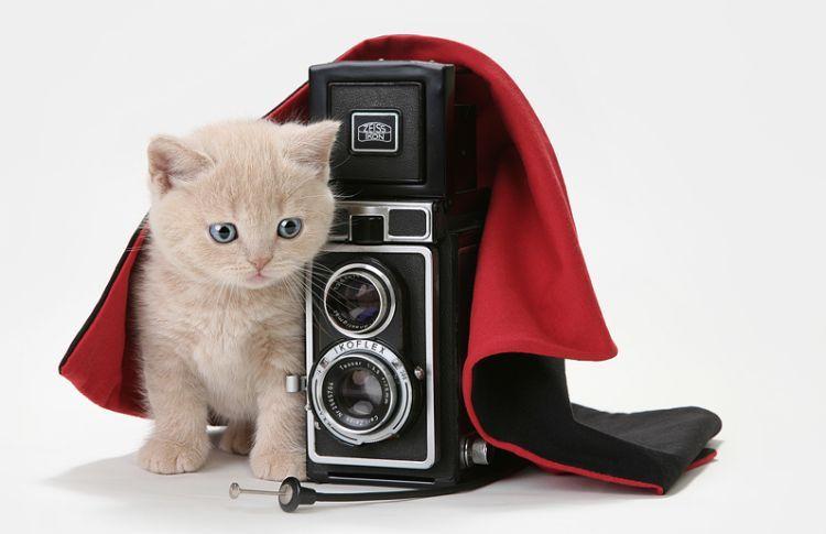 Кошки и котята фотосессия