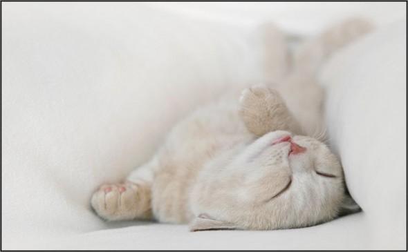 Кошка спит в складках одеяла