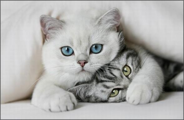 Два котенка в обнимку