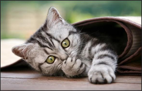 Котенок забрался в свернутый ковер