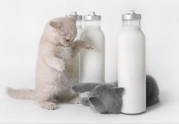 Котята воюют за молоко