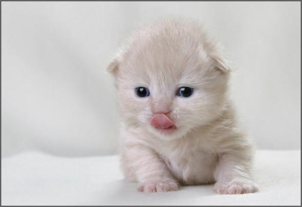 После того, как сосал маму кошку