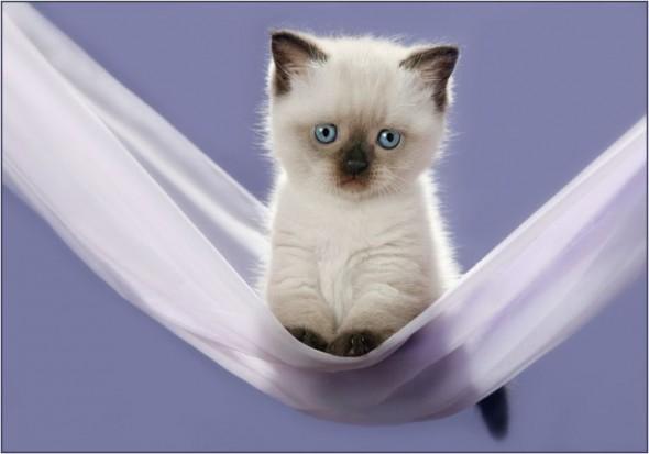 Котенок в гамаке
