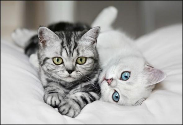 Котята готовы напасть