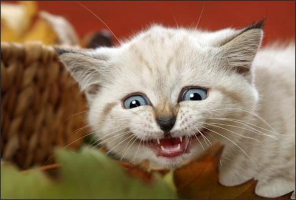 Котенок увидел страшного зверя