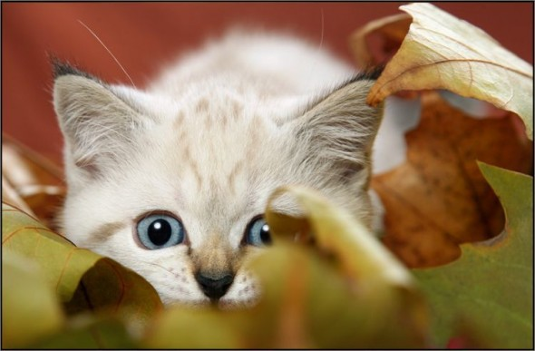 Котенок готов напасть из засады
