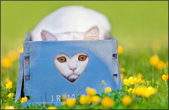 Ящик для кота