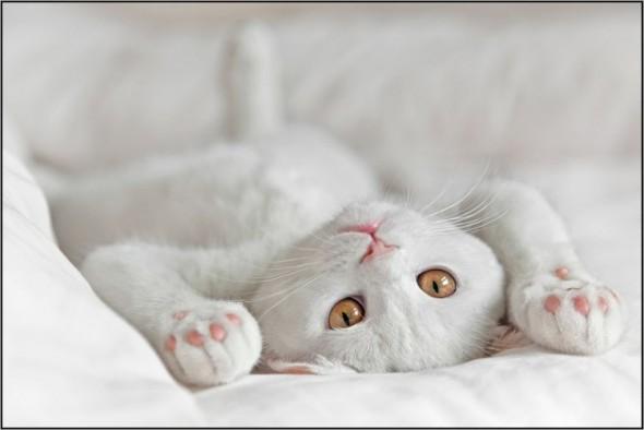Кот лежа вверх животом