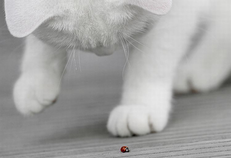 Красивые котята (37 фото)