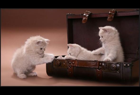 Три кота и саквояж