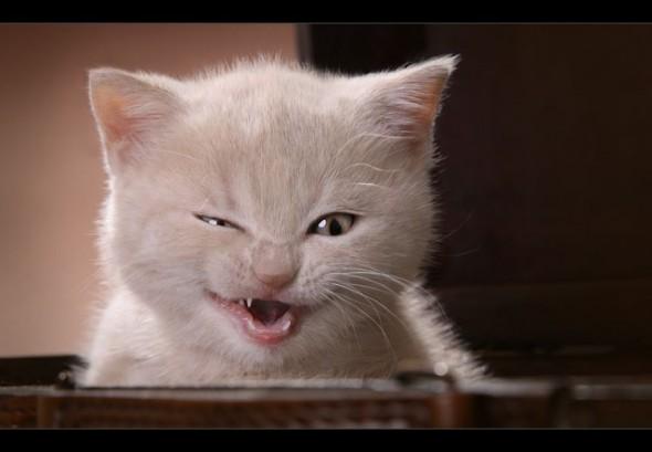 Кот - страшный хищник