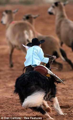 Потрясающая обезьянка - ковбой