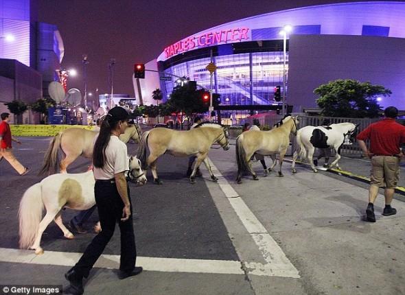 Лошади на параде