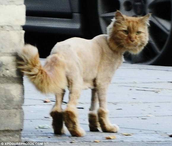 Новая мода: кот в сапогах