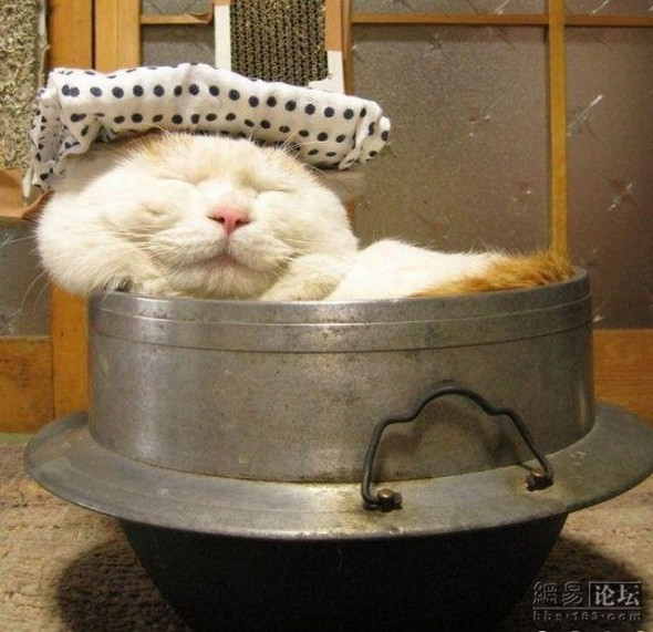 Дремающий кот