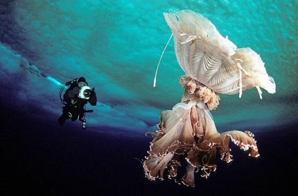 Красота подводного мира