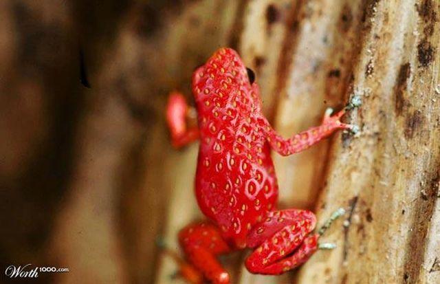 1000 Beautiful Animals Photos  Pexels  Free Stock Photos