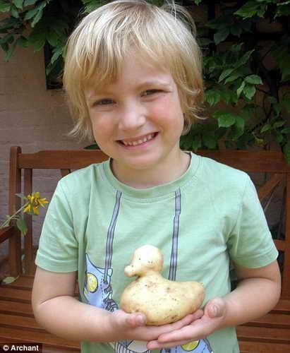 Картофель в форме утенка