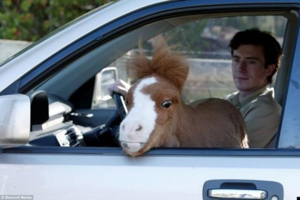 карликовая лошадь