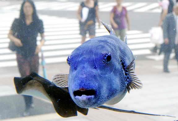 Возле здания Sony в Токио установили аквариум с экзотическими рыбками