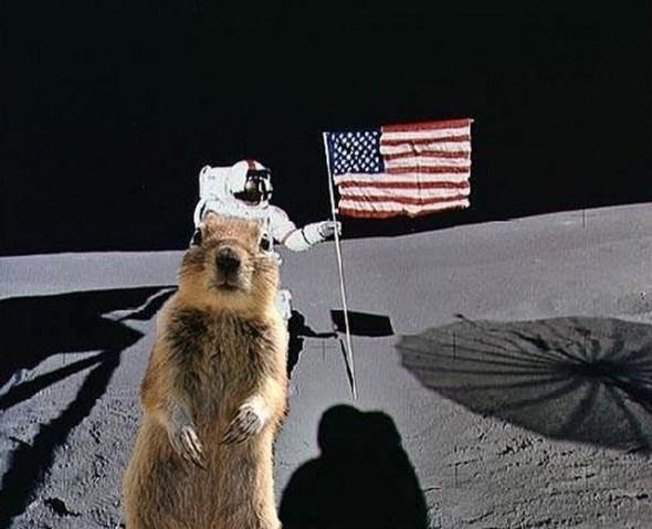 белка на луне
