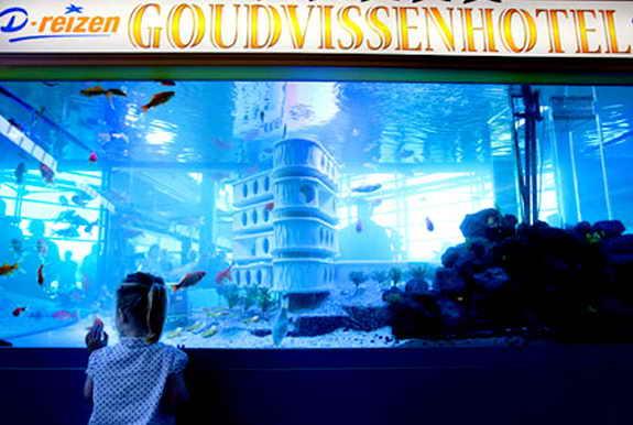 Отель Золотая рыбка