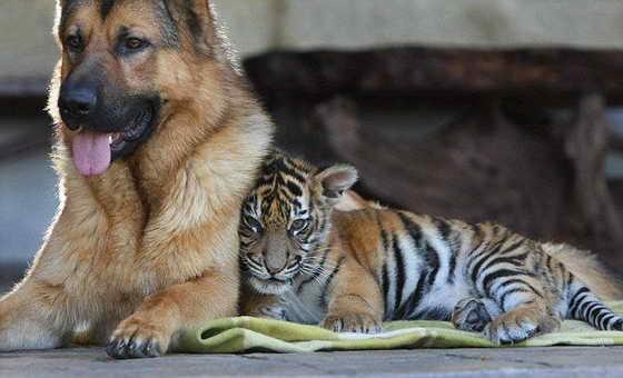 картинки про животных смешные: