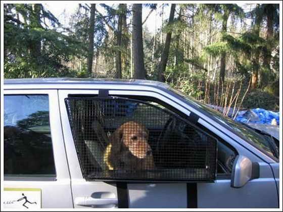 приспособление для собак