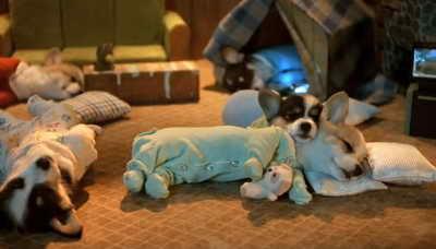 пижамки щенкам