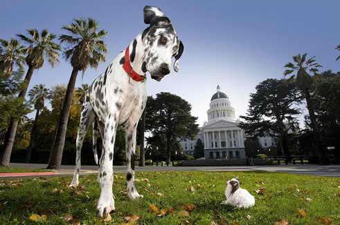 Самая большая и самая маленькая собака