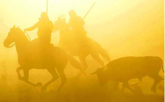 """в испанском городе Тордесиллас состоялся один из самых старых фестивалей Испании """"Toro de la Vega"""", который ведет свои корни еще с 15-го века"""