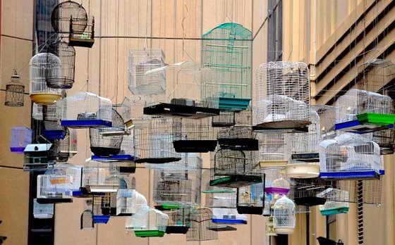 """В Сиднее прошла инсталляция под названием """"Забытые песни"""": подвесили клетки с птицами и включили пение птиц, которые жили в городе до развития цивилизации"""