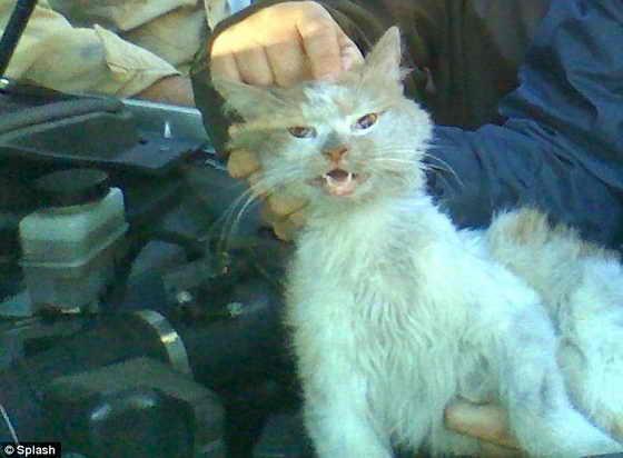Чудом выжившая кошка