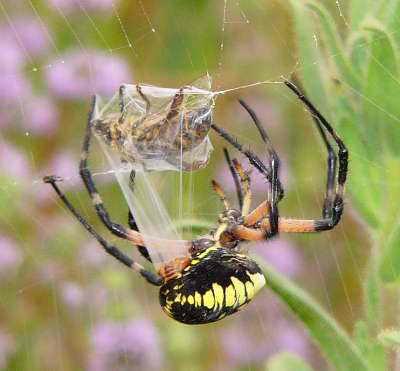 По статистике, люди боятся пауков больше, чем те смерти