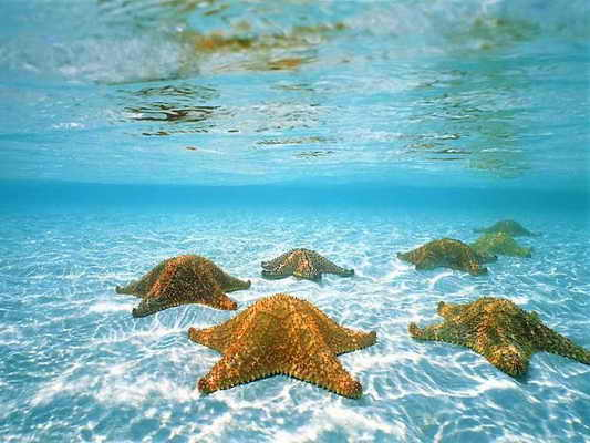 У морских звезд нет мозгов