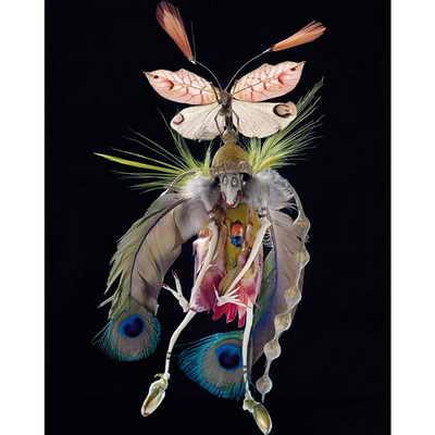 Скульптуры эльфов украшены ракушками, мхом, перьями, частями насекомых: в основном крыльями бабочек, пластинами жуков, частями мотыльков, прозрачными крылышками переливающихся жуков