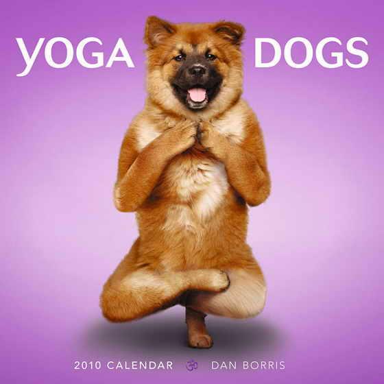 """Обложка календаря """"Собачья йога"""""""