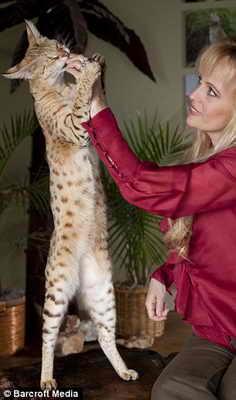Книга рекордов самый большой кот в мире фото