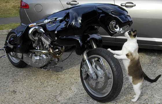 Кот приглядывается к мотоциклу Night Shadow, который Баренд Массоу Хеммес сделал из огромного значка Jaguar и мотоцикла 1200cc Buell 97 S3 Thunderbolt, который он приобрел на Ebay.