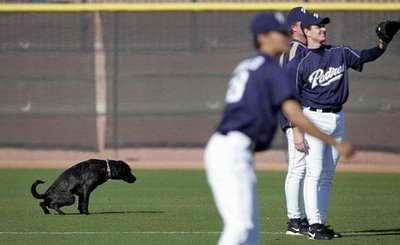 Похоже собачка не очень любит бейсбол