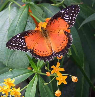 Яркая тропическая бабочка на фото слепого фотографа Brian Negus