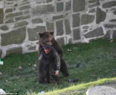 Нападение: Медведь смыкает челюсти на раненном мужчине в Швейцарском зоопарке